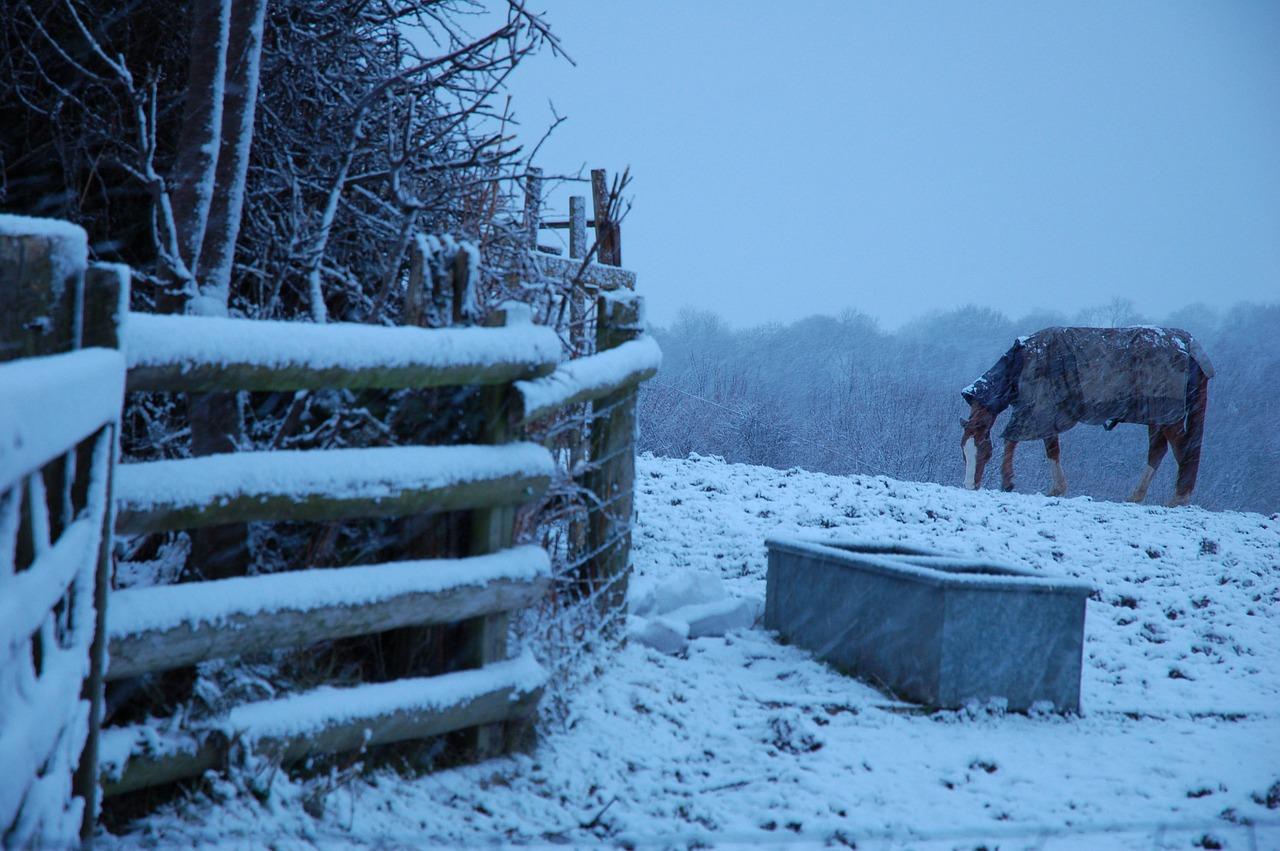 Péče o koně v různých ročních obdobích
