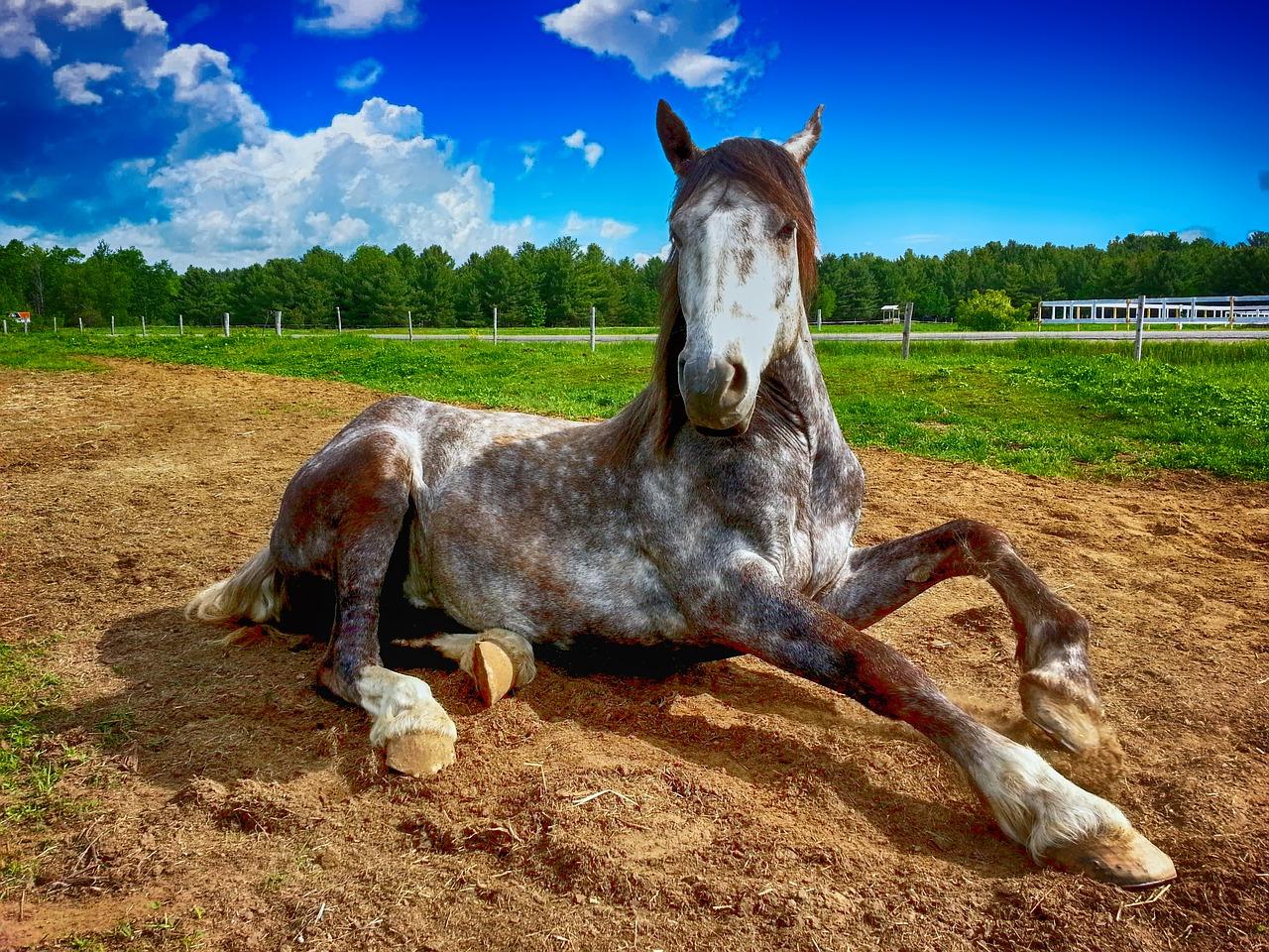 Proč si pořídit koně?