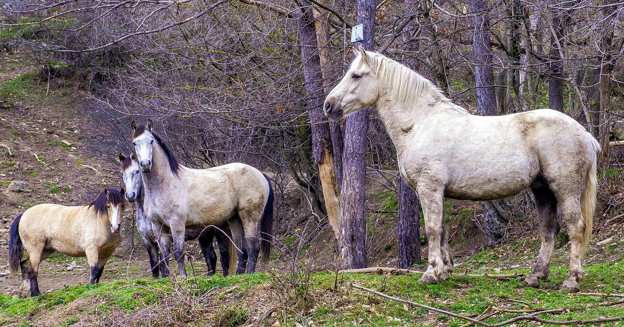 Chov koní na pastvině